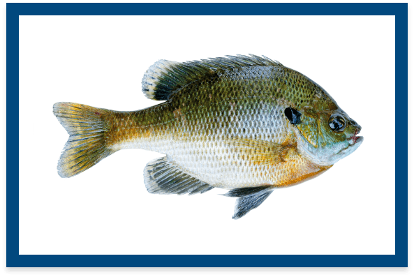 Fish Stocking Services - Georgia Planation Solutions